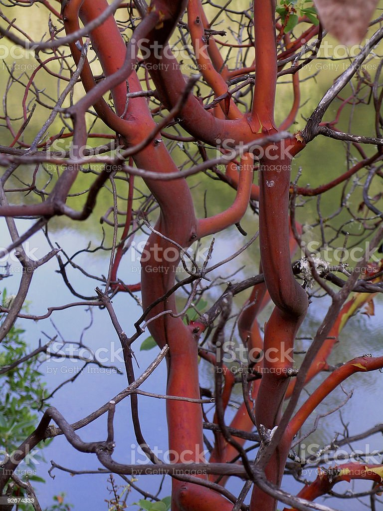 Red & Gnarly royalty-free stock photo