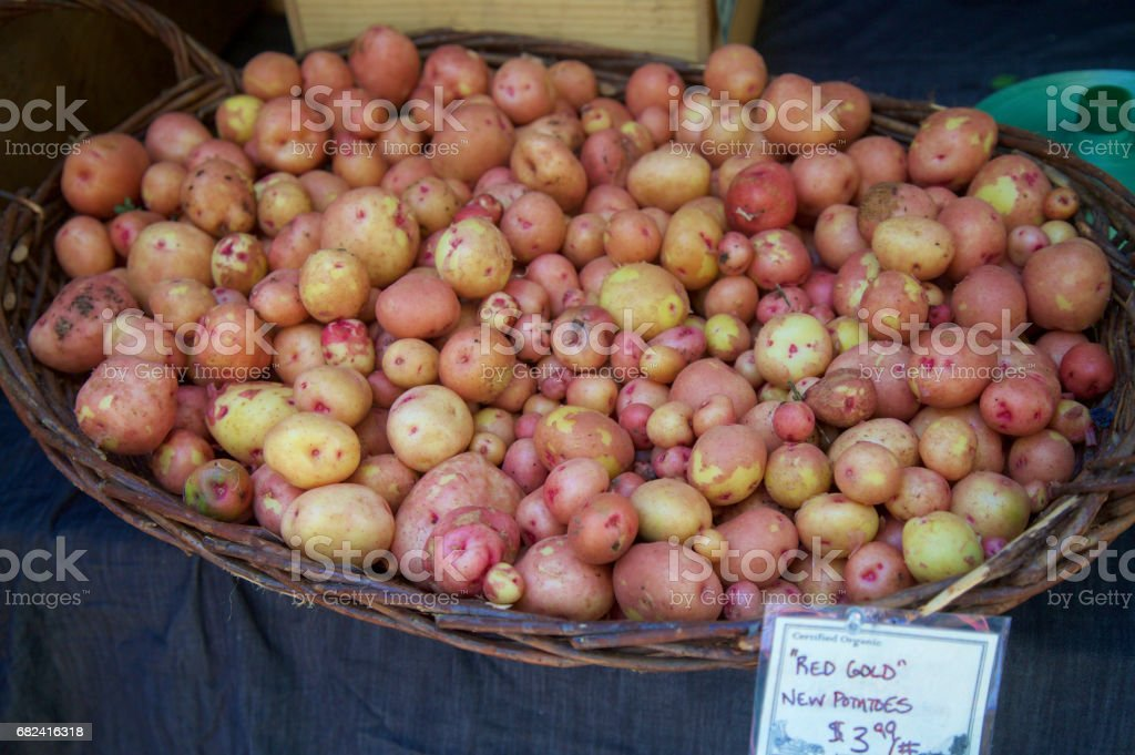 Red gold new potatoes at the farmer's market stock photo