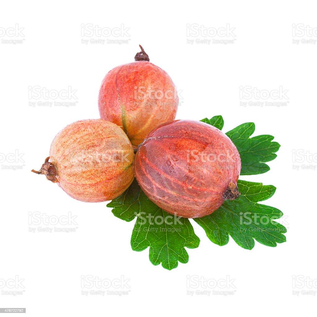 Red Goosberry stock photo