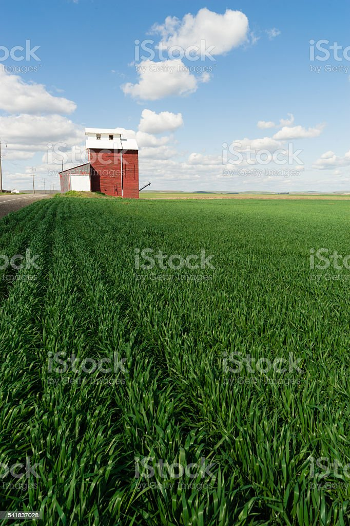 Red Grain Elevator Blue Skies Agriculture Green Crops Field stock photo