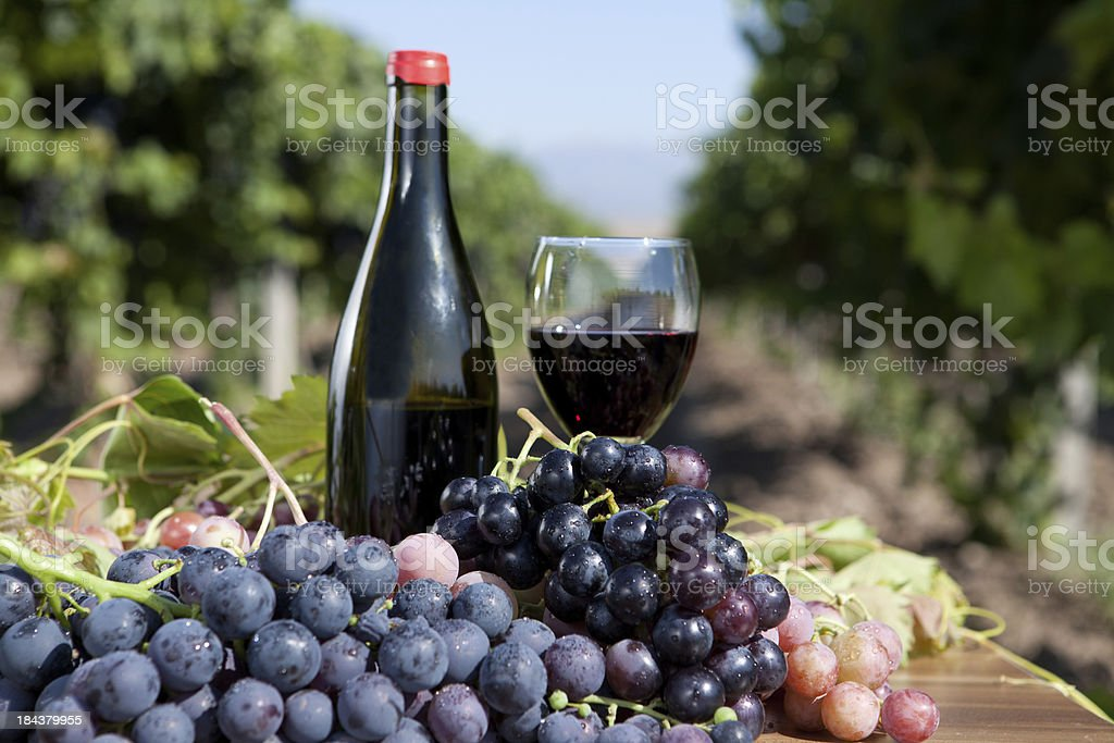 Red Grape and Wine royalty-free stock photo