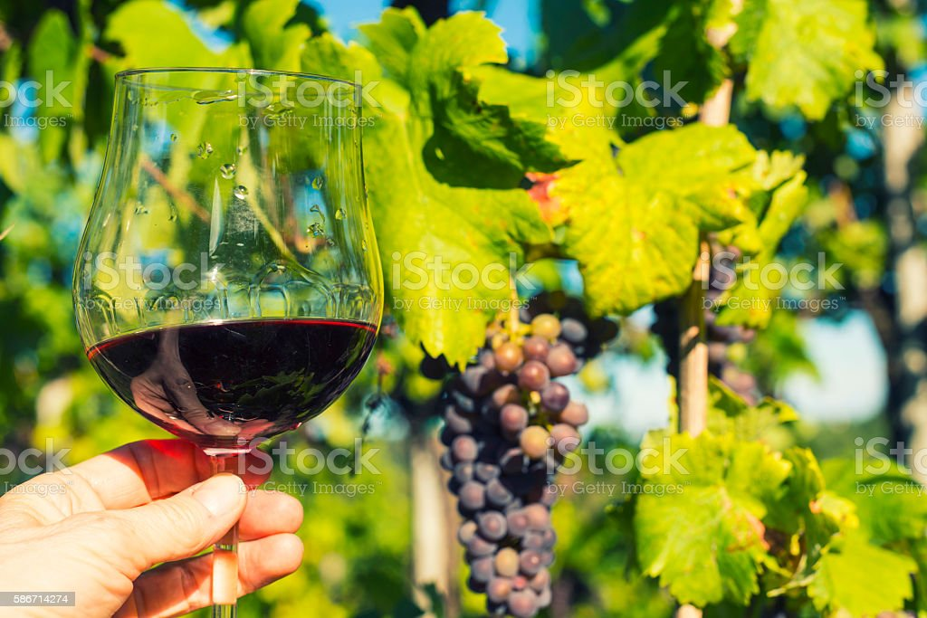 Red grapes against and glass of red vine stock photo
