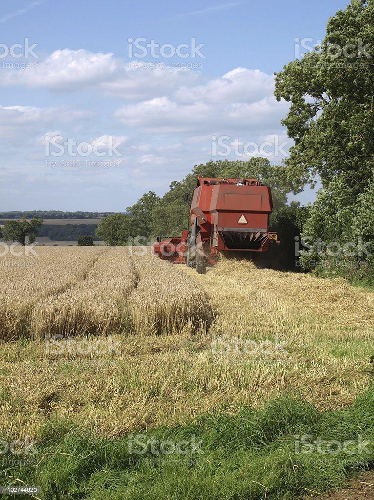 Red Harvester in Corn Fields stock photo