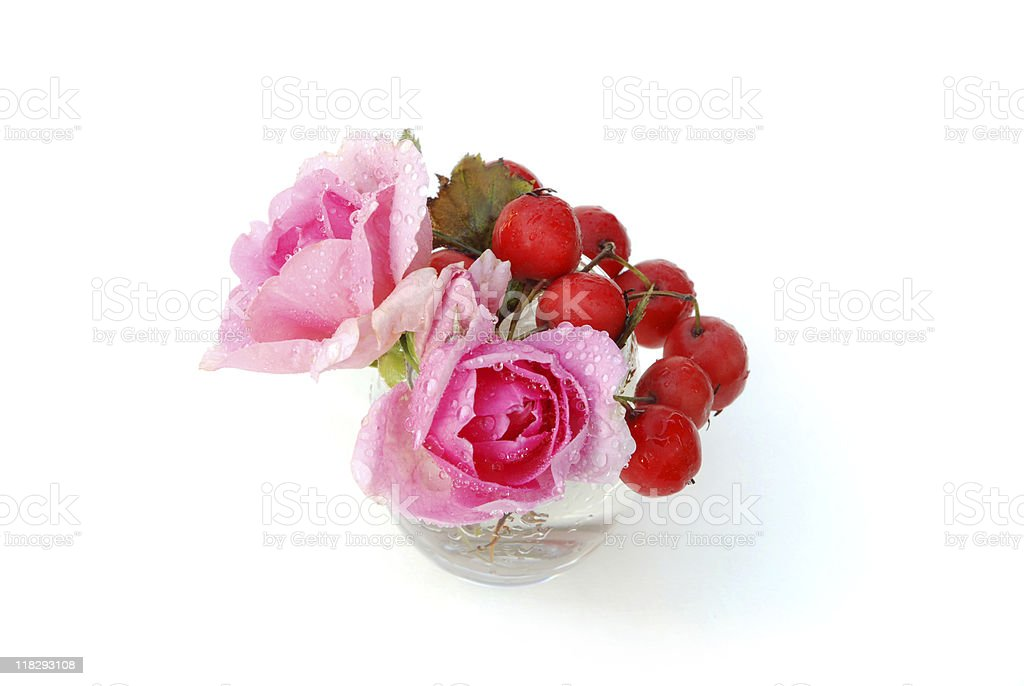 Red haw berries and two pink roses isolated on white stock photo