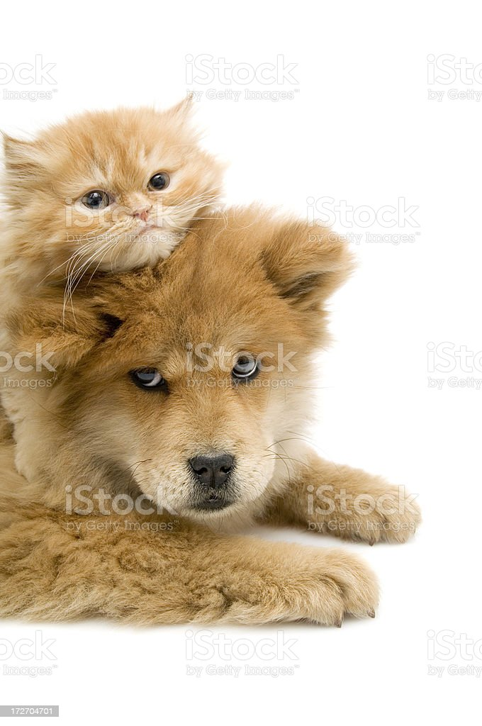 red heads, stock photo