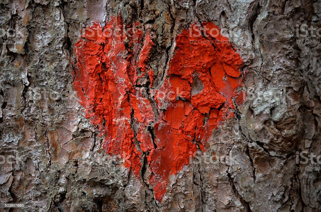 red heart painted on pine tree bark stock photo