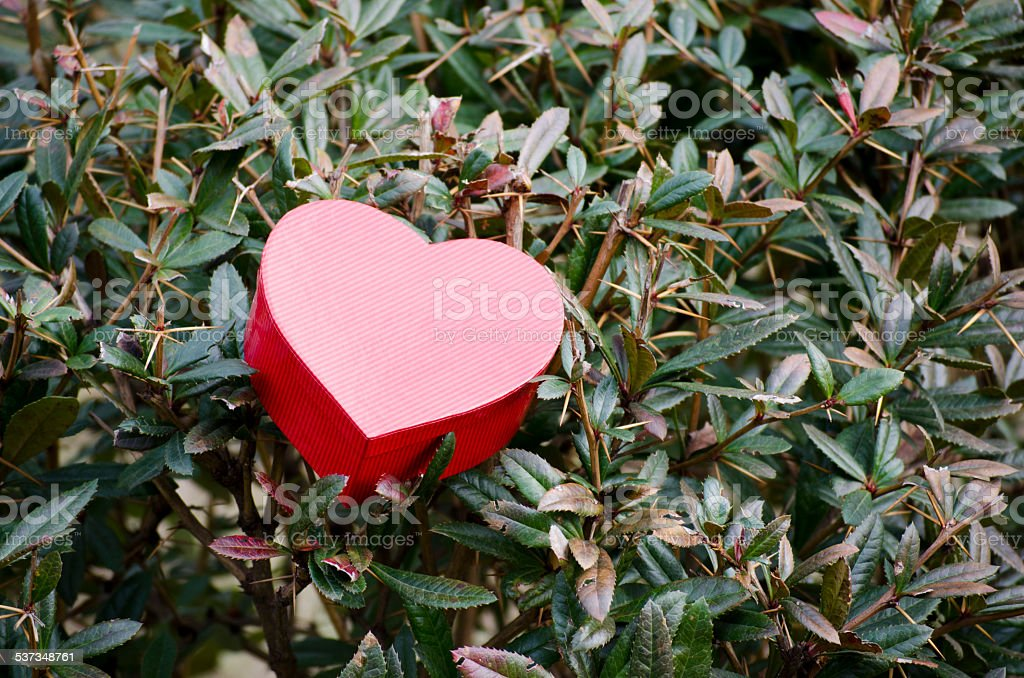 Red heart shaped box in bushes royalty-free stock photo