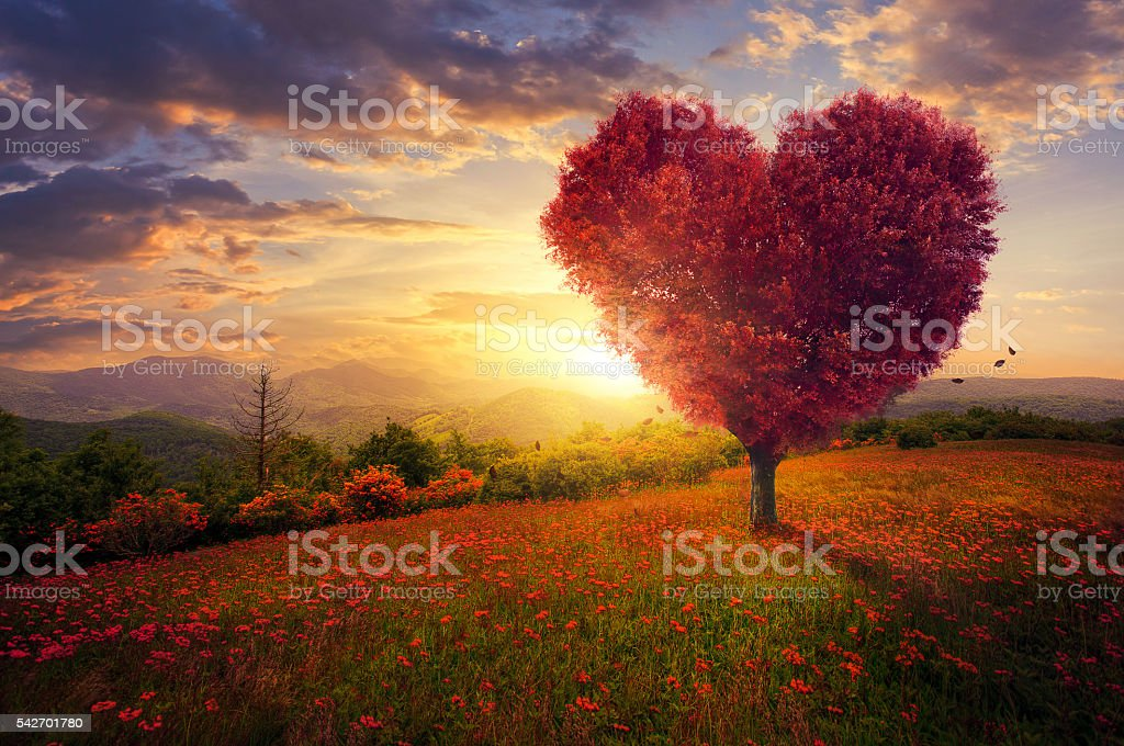 Red heart shaped tree stock photo