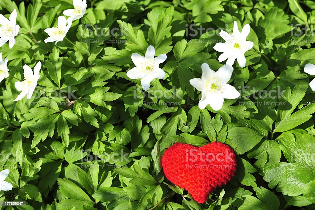 Red heart with white flowers royalty-free stock photo
