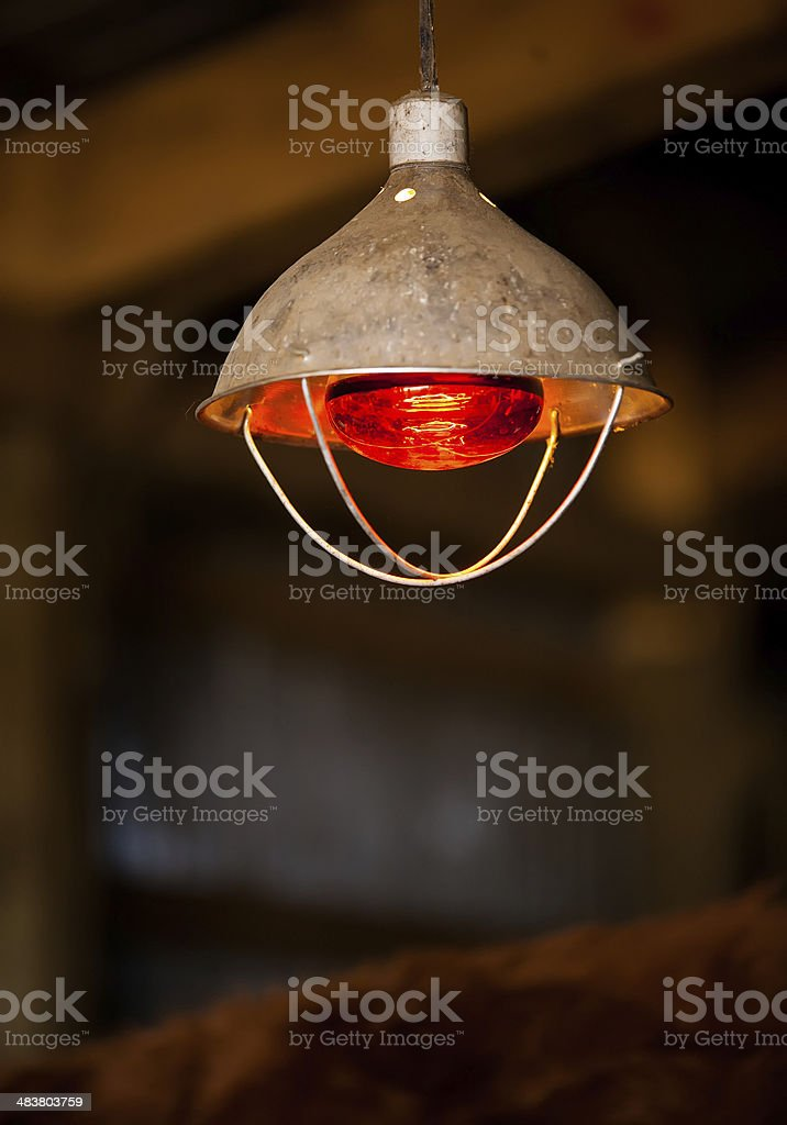 Red Heat Lamp in Calving Barn stock photo