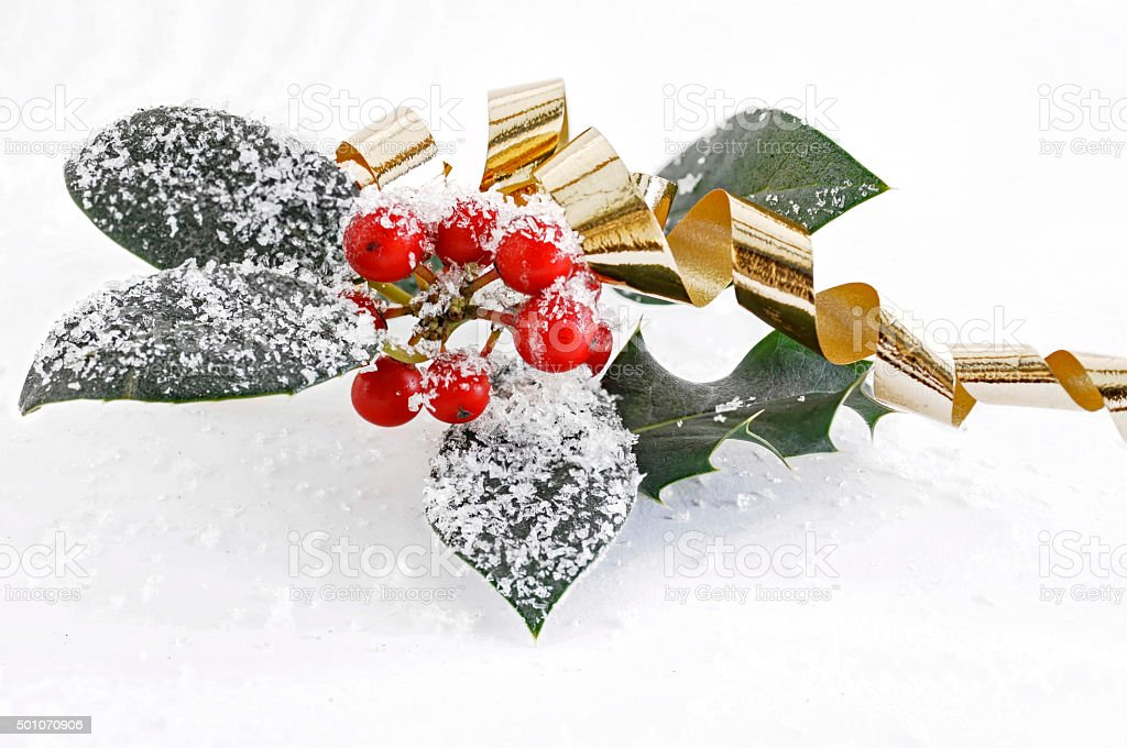 red holly berries with a golden ribbon stock photo