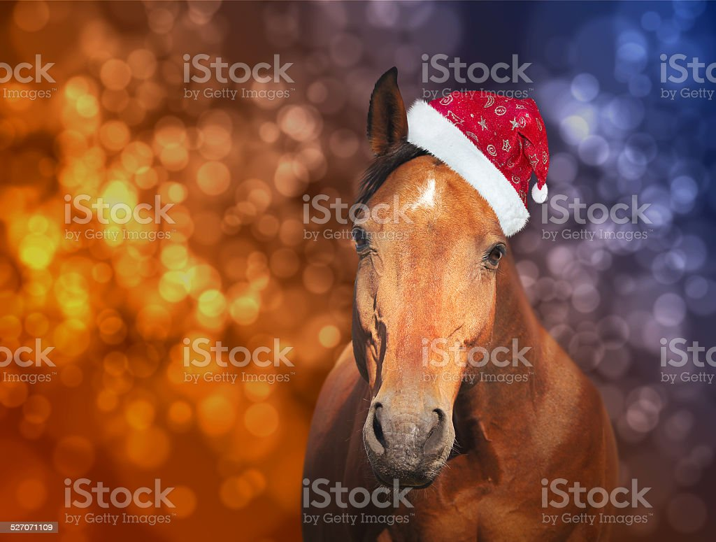 red horse in  Santa hat on Christmas background with bokeh stock photo