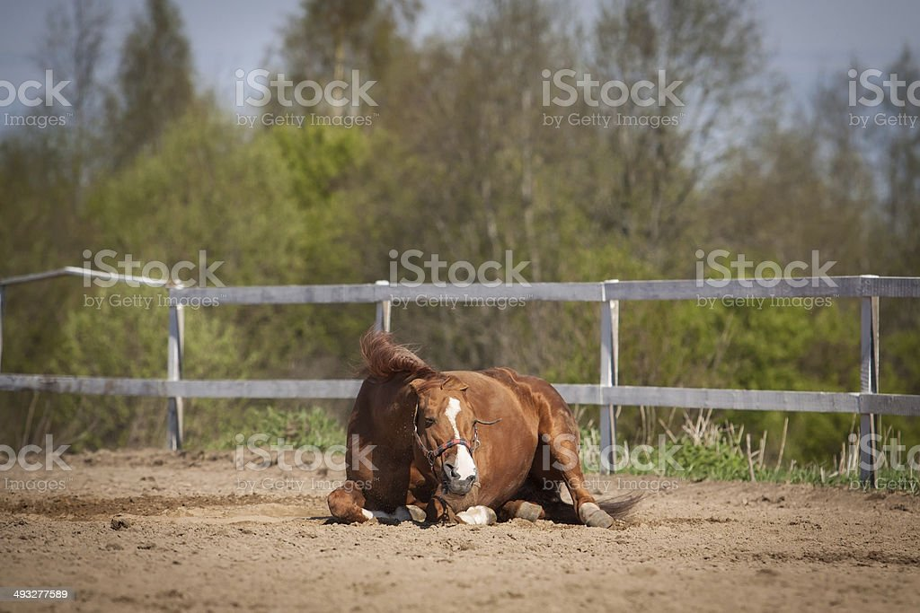 Red horse royalty-free stock photo