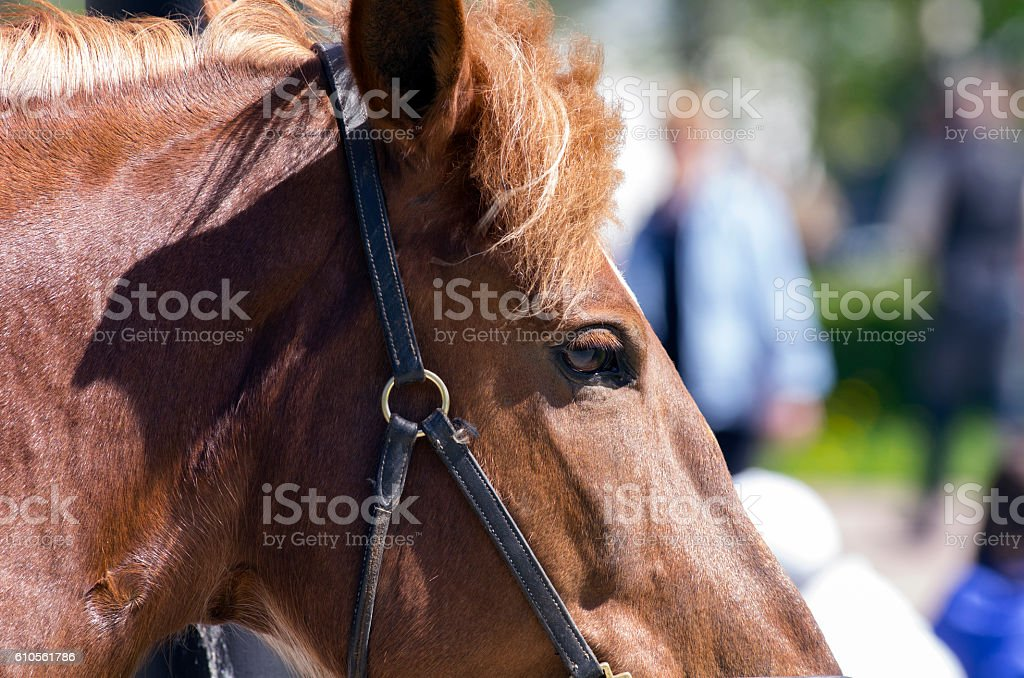 Red horse stock photo