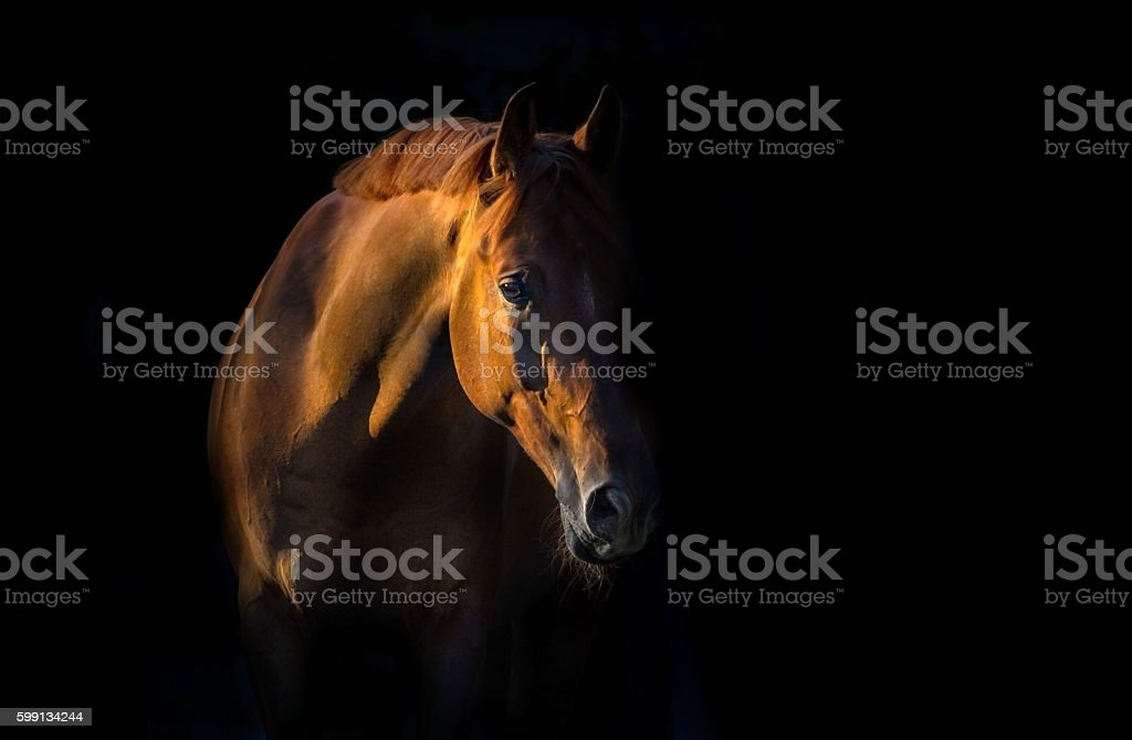 Red horse portrait stock photo