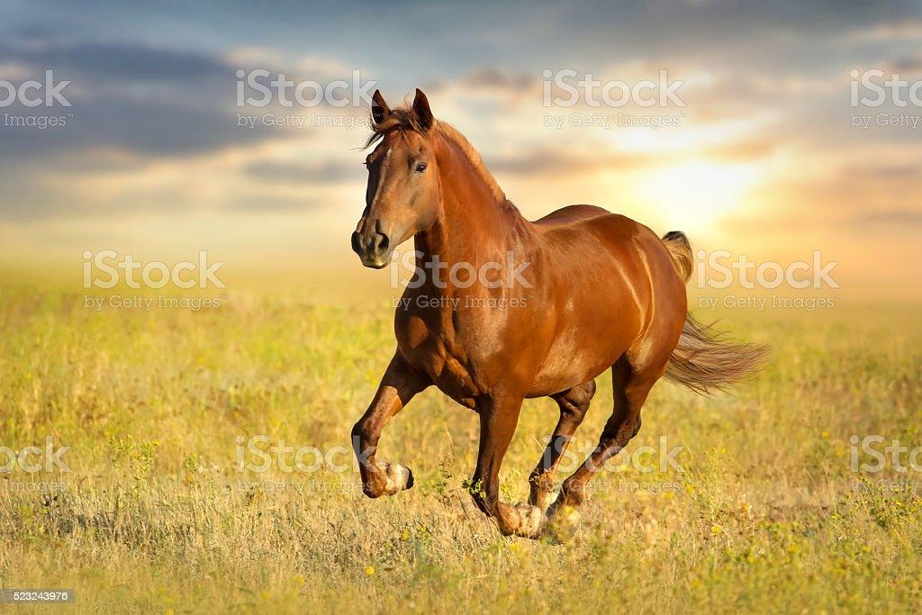 Red horse run stock photo