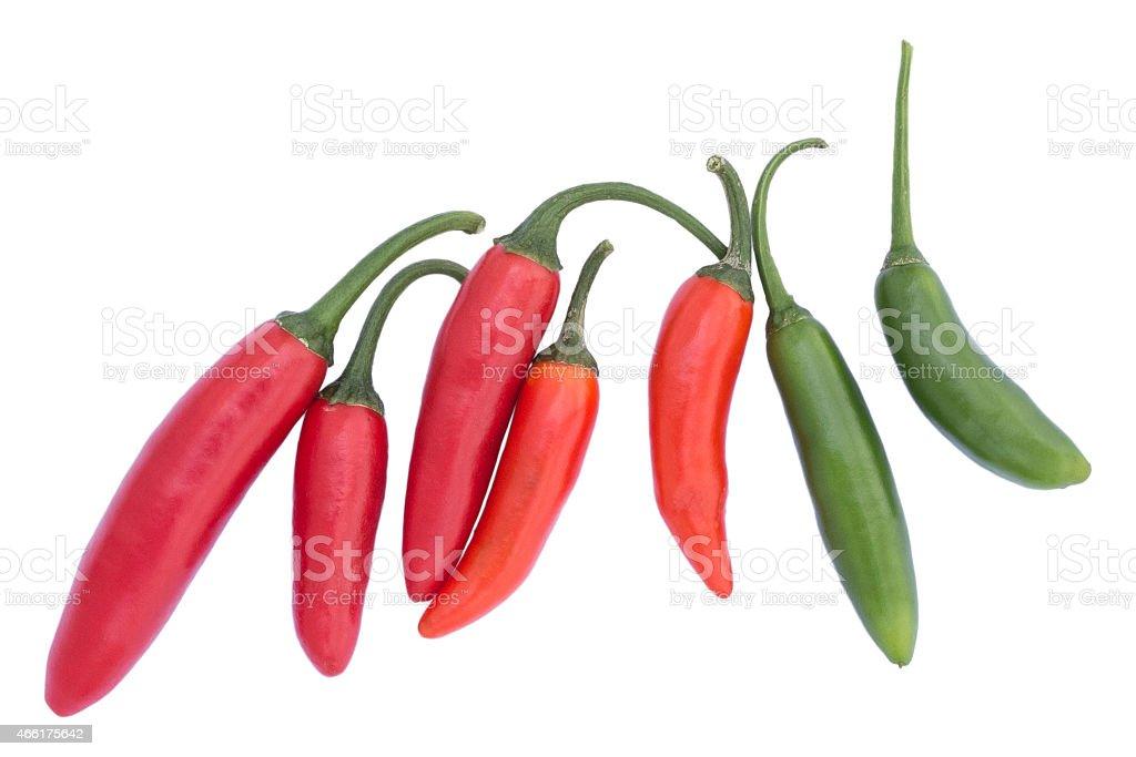 Red hot Chili Pepper: Serrano Tampiqueno (Capsicum annuum) stock photo