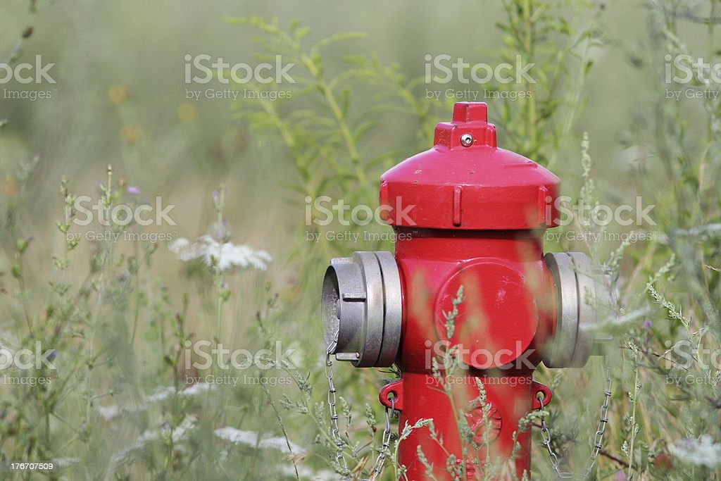 red hydrant royalty-free stock photo