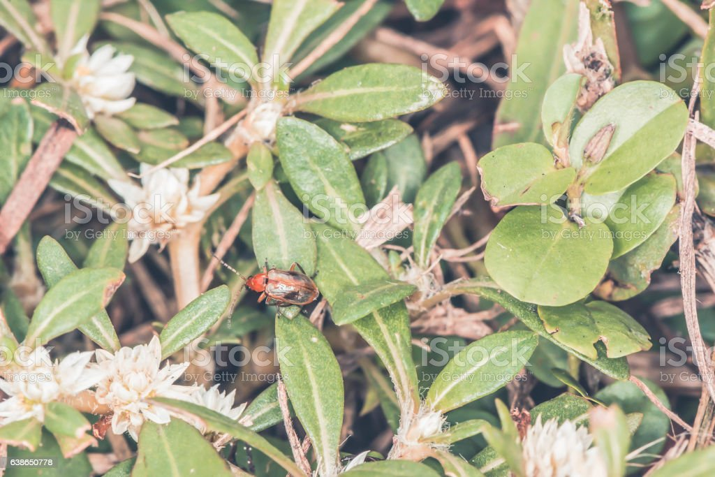 red insect in forest stock photo