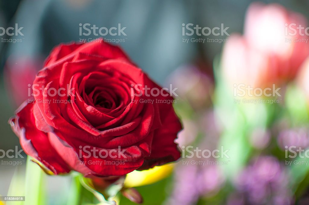 Red is for love stock photo