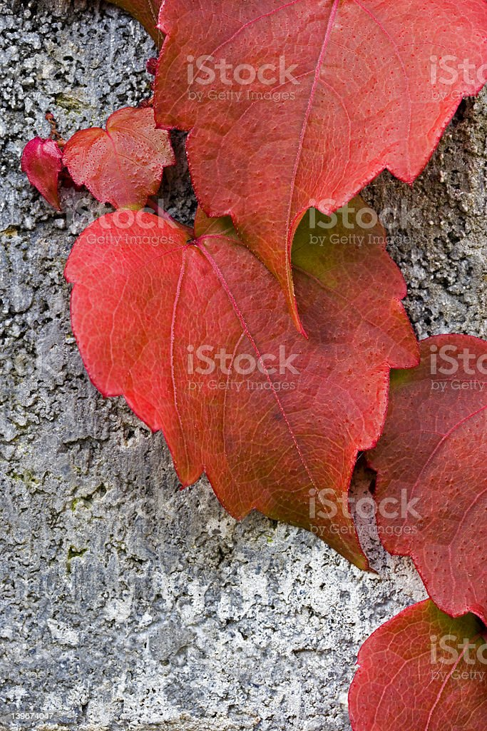 Red Ivy Pattern royalty-free stock photo