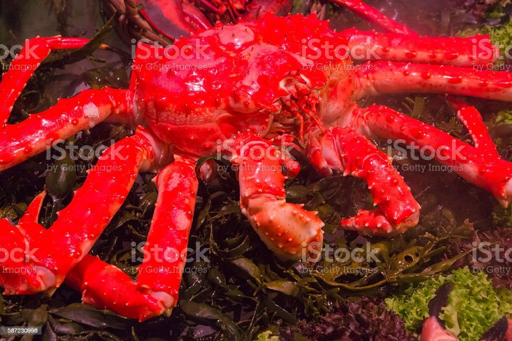 Red King Crab stock photo
