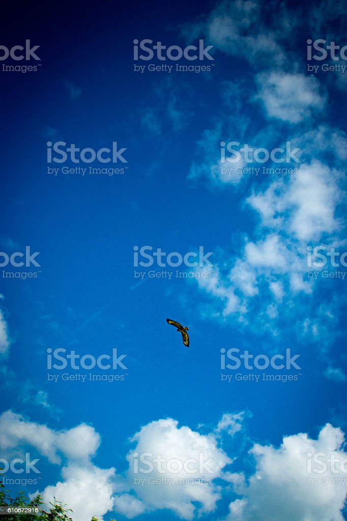 Red Kite against a blue sky stock photo