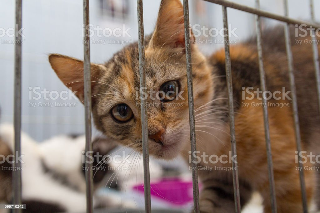 Red kitten in a cage arrives at the shelter. Pets stock photo
