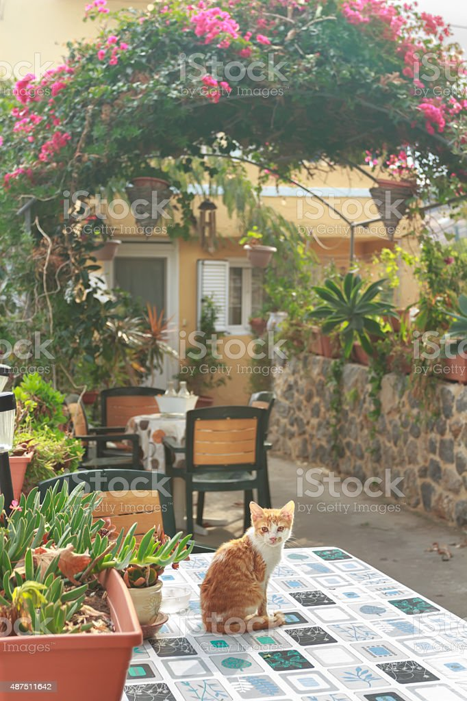 Red kitten inside Greek traditional patio with garden flowering plants stock photo