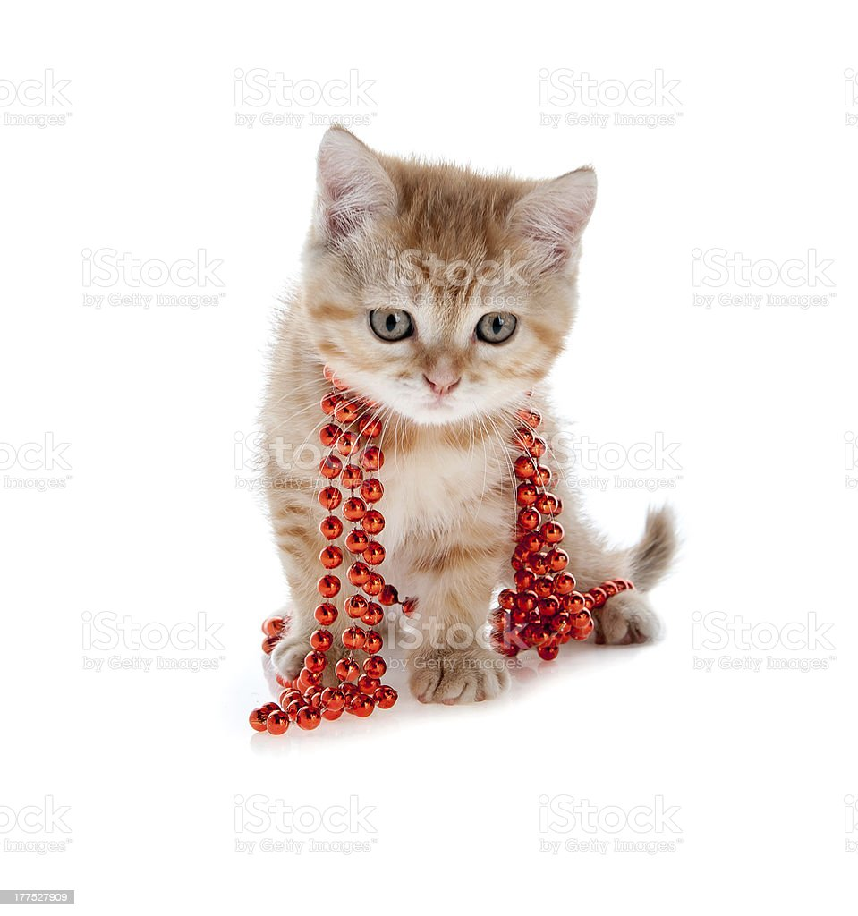red kitten sitting in a tree on the white beads royalty-free stock photo