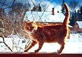 red kitten winter day
