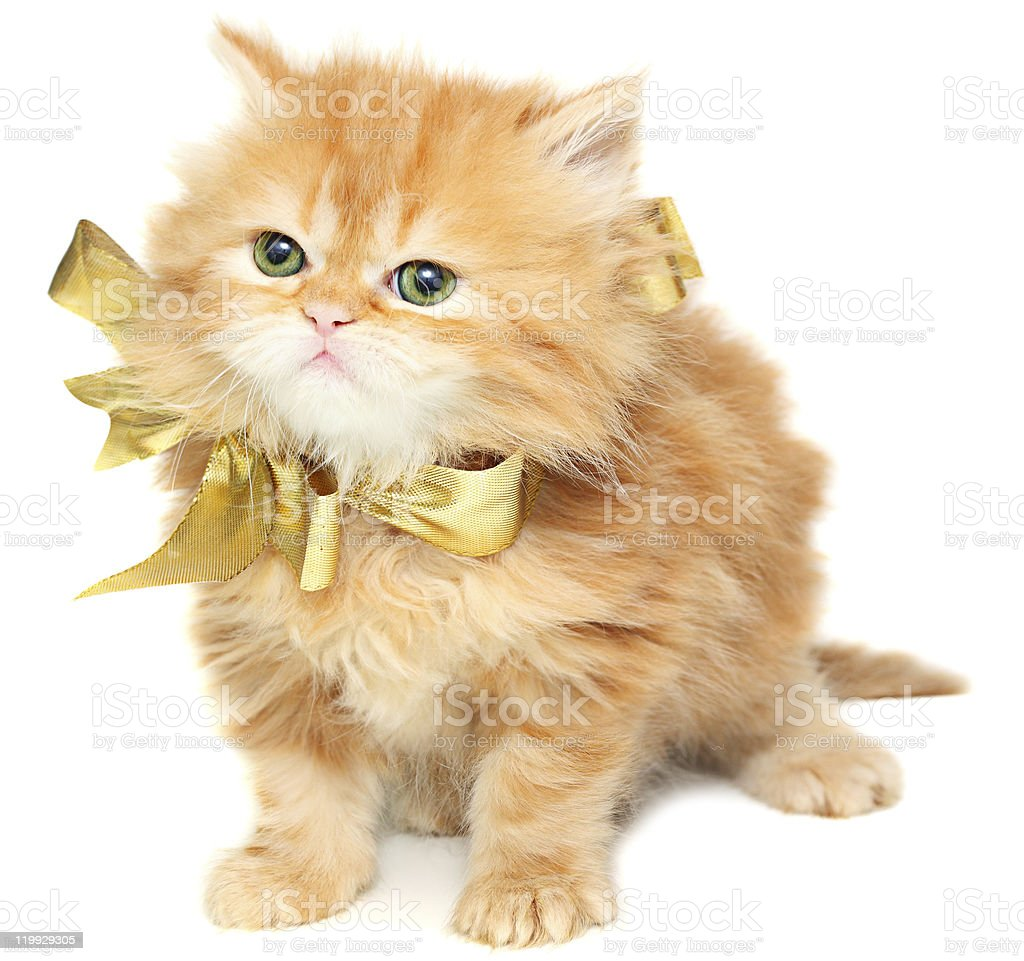 Red kitten with gold bow. royalty-free stock photo