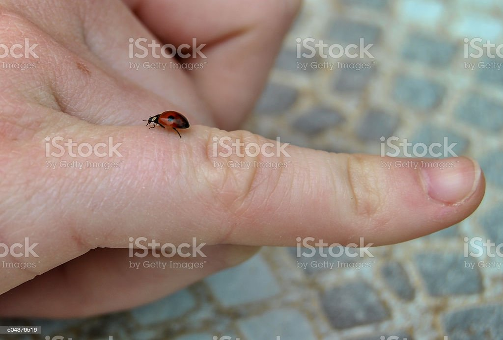 Red Ladybird on a human finger stock photo