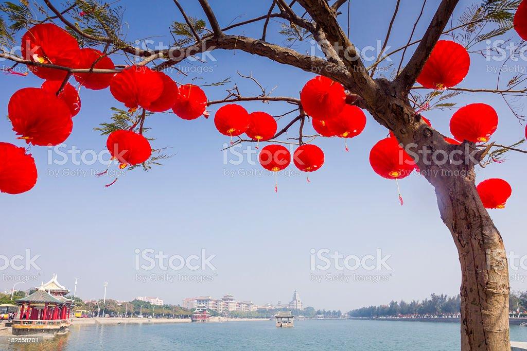 Red lantern hanging on branch stock photo