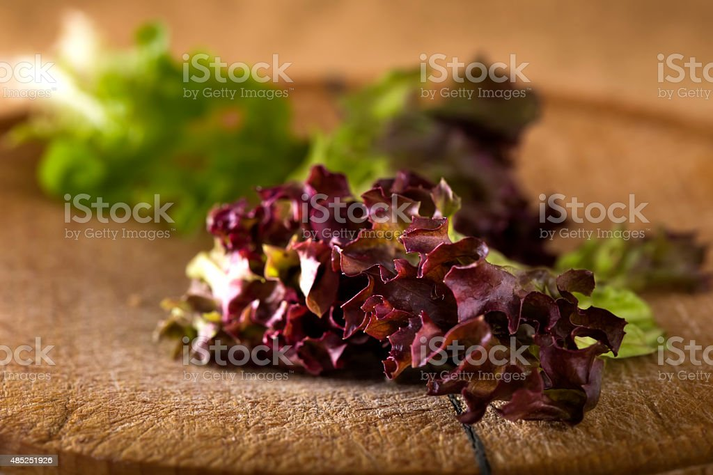 Red leaf coral lettuce stock photo