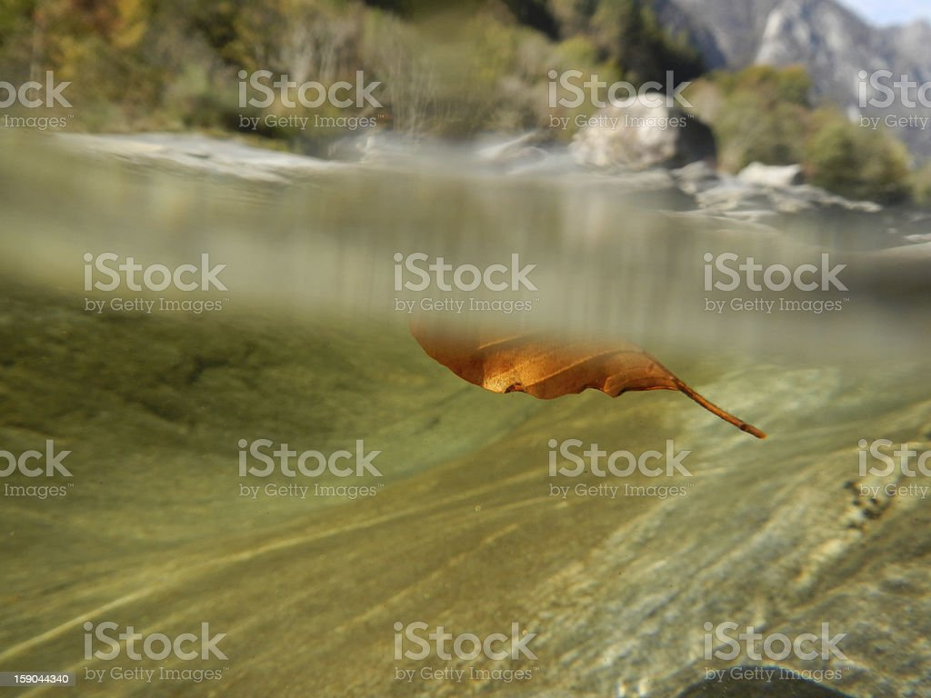 Red leaf floating royalty-free stock photo