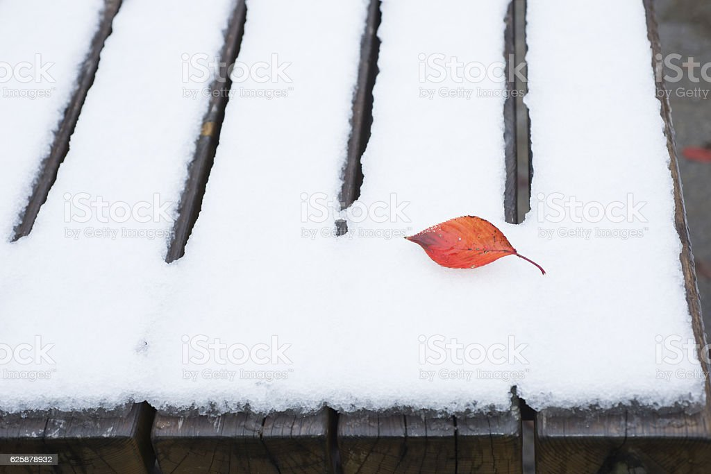 Red leaf in snow stock photo