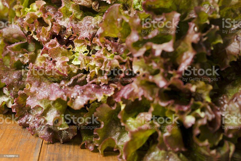 Red Leaf Lettuce Close-up Horizontal stock photo