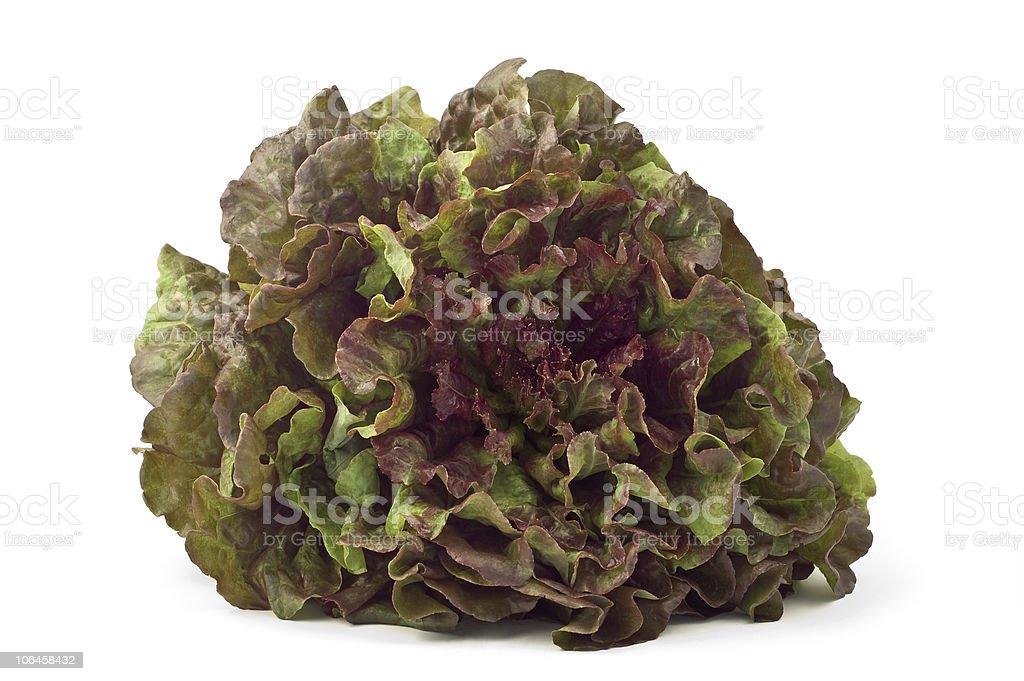Red leaf lettuce stock photo
