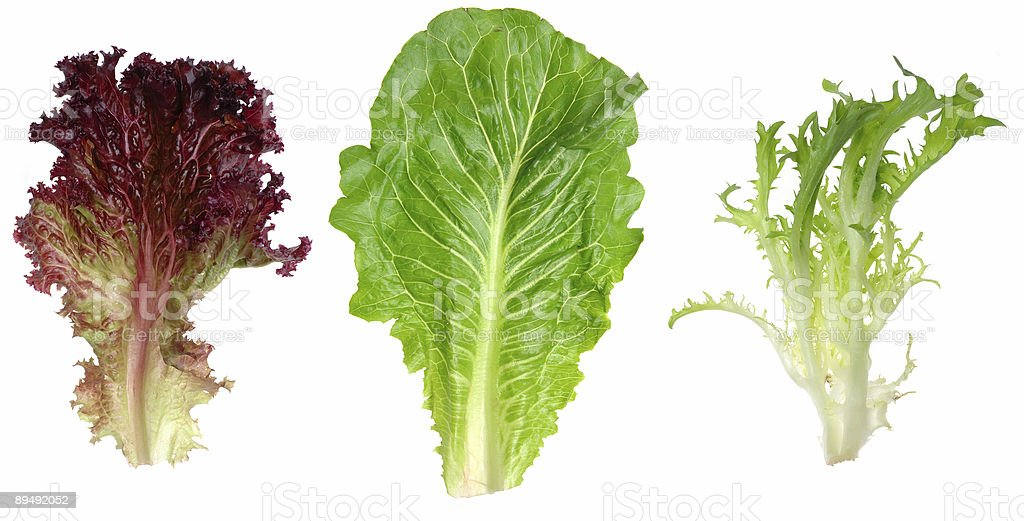 Red leaf lettuce, romaine and endive stock photo