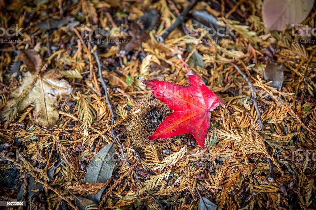 Red leaf lying on ground stock photo