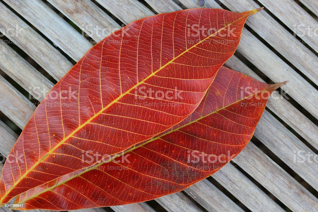 Red leaf on bamboo close stock photo