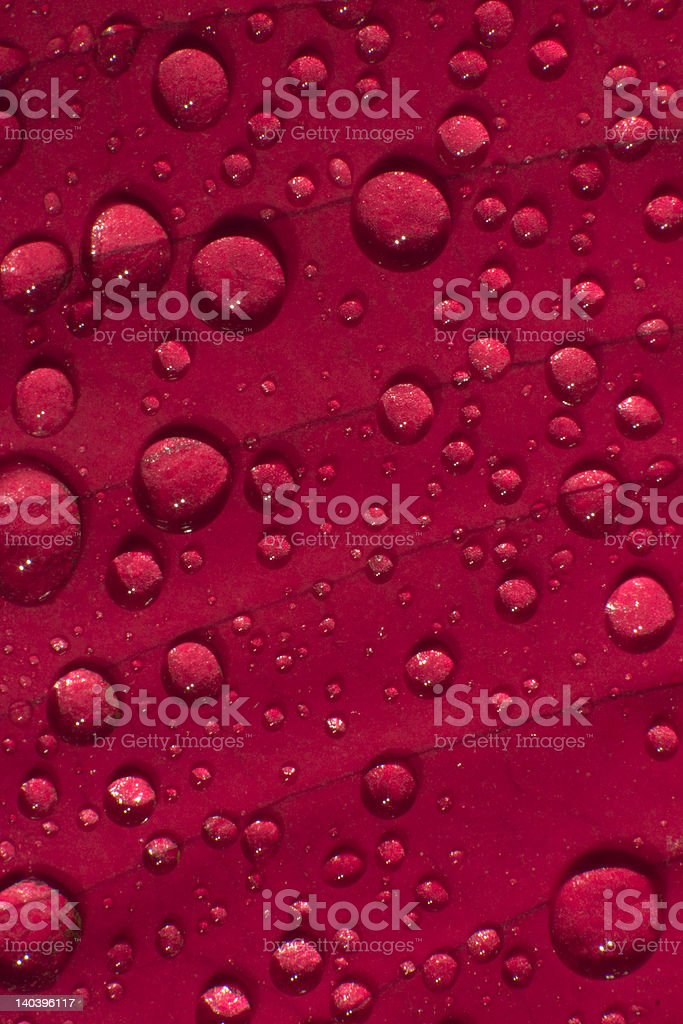 red leaf with dew drops royalty-free stock photo