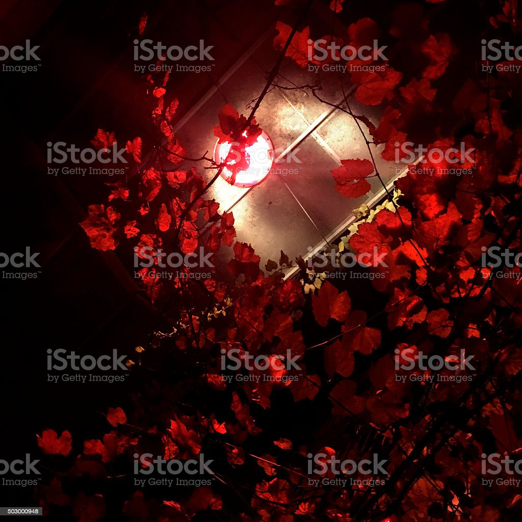 Red Leaves and Street Lamp in Night stock photo