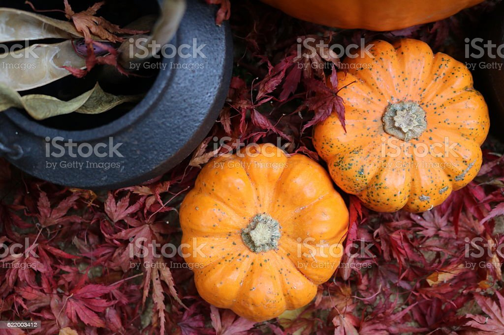 Red leaves, cauldron ingredients and pumpkins from above stock photo