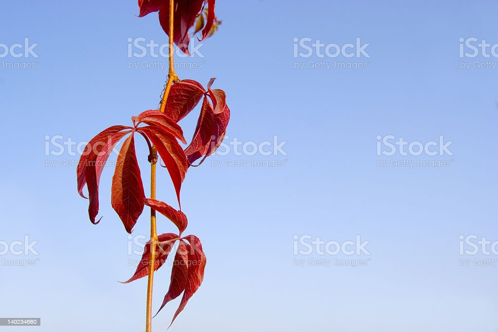 red leaves on sky stock photo