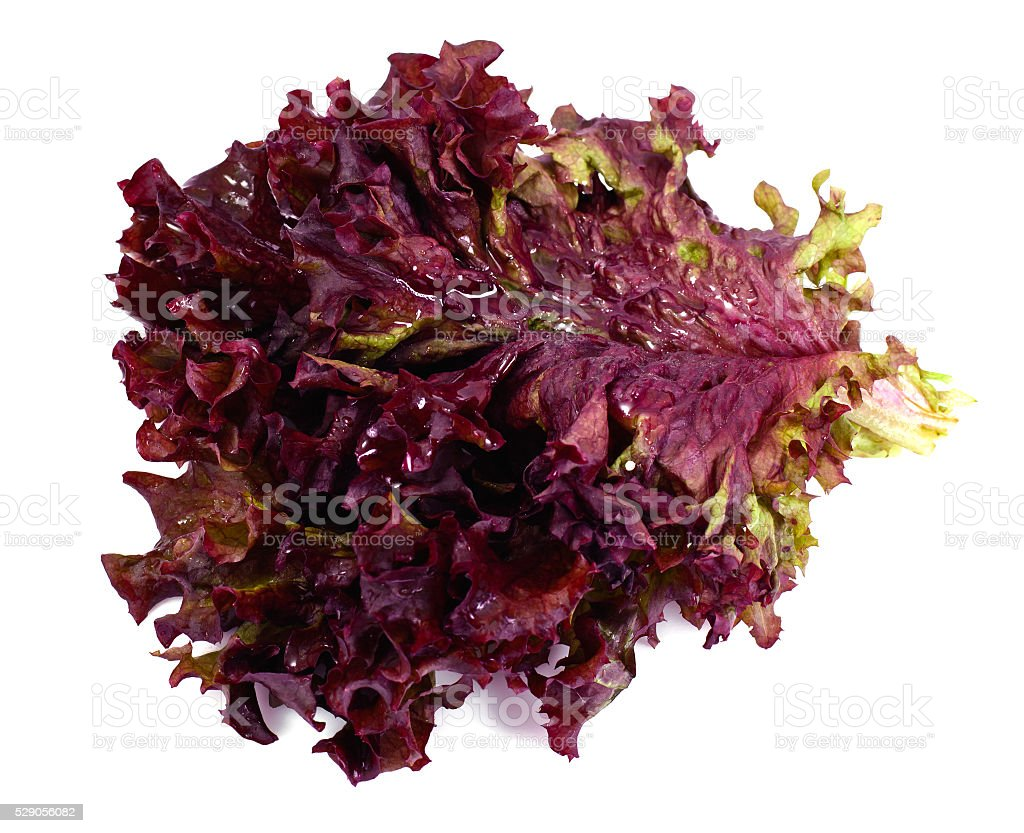 Red Lettuce Isolated on White Background stock photo