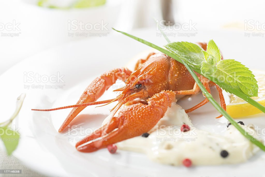 Red lobster on a white plate royalty-free stock photo