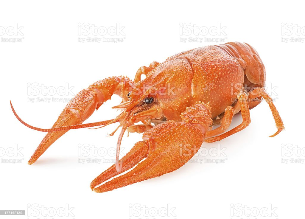 Red lobster royalty-free stock photo