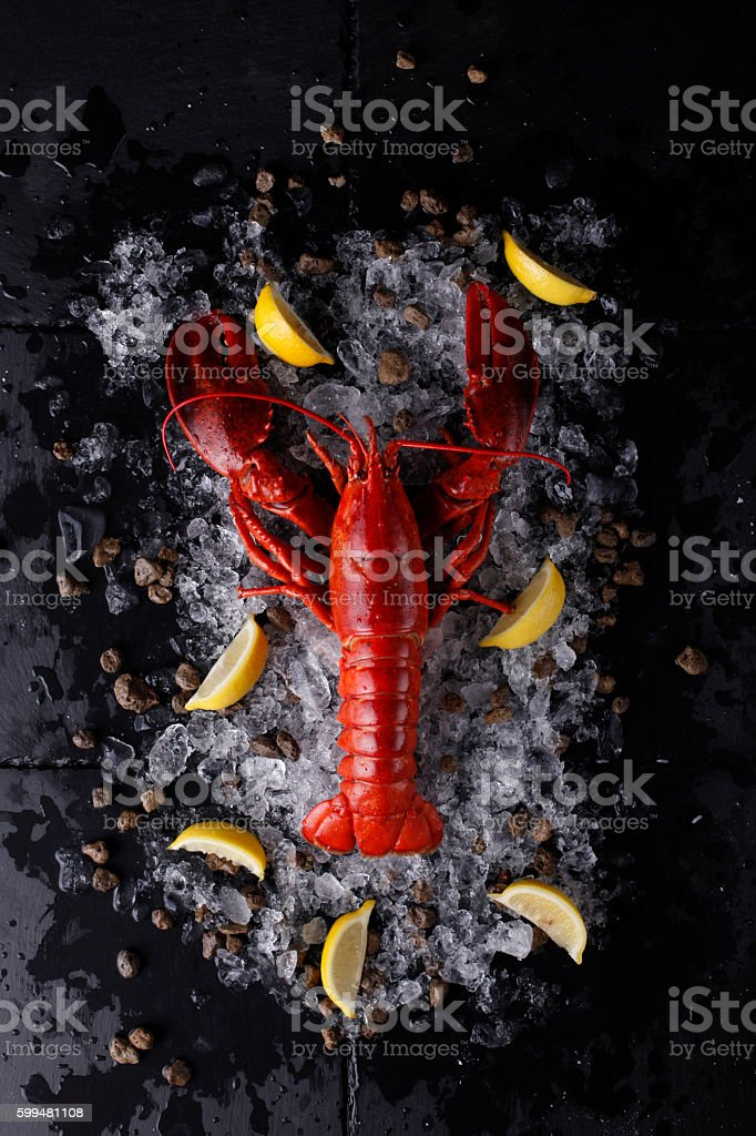 Red lobster with ice and lime stock photo